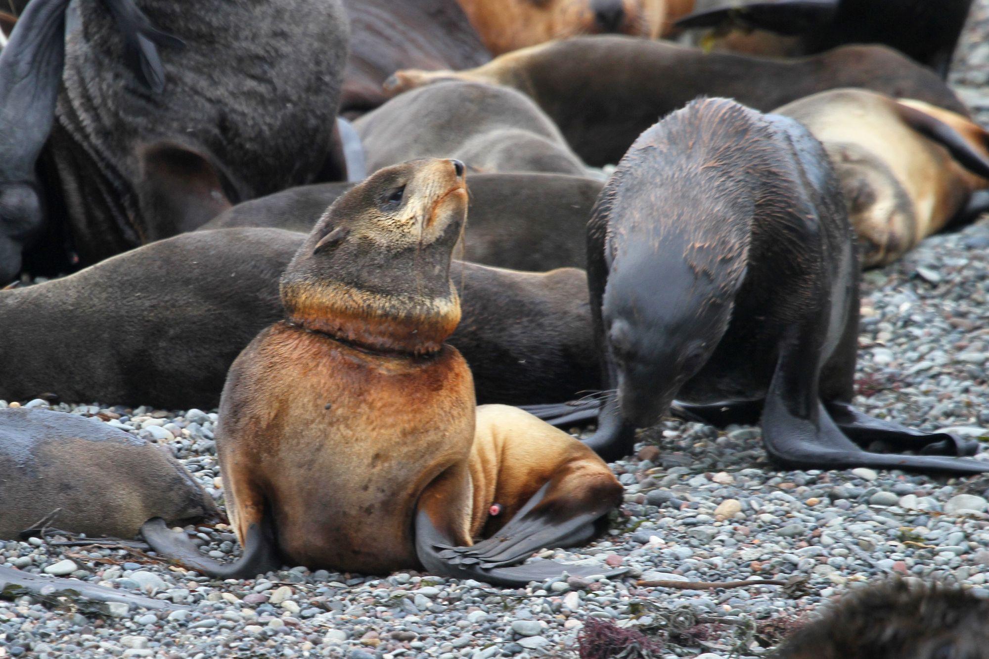 церемония поздравление от тюленя бойцов